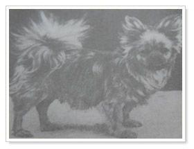 5 mughiwuli uit dogs of tibet and the history of the tibetan spaniel mrs ann wynyard f666a5b0